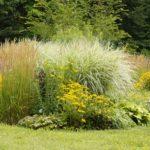 Voll im Trend – Ziergräser im Garten